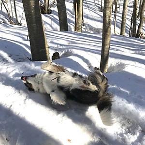Cani delle Nevi