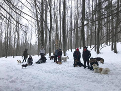 Cani delle nevi, Sestola Gennaio 2019