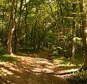 16-bosco-ginestre.jpg