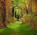 Foliage Bosco Vanzago.jpg