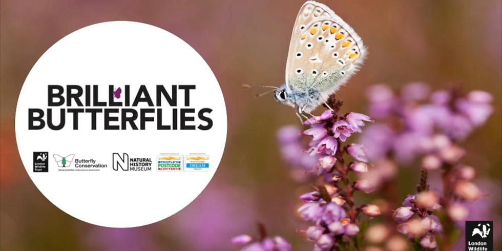 Brilliant Butterflies Volunteering - Dollypers Hill