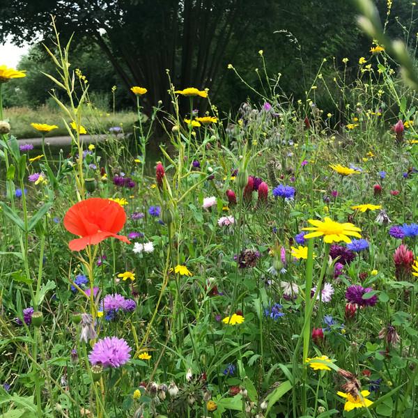 Runner Up - Richard's Wildflowers, Addiscombe Railway Park