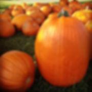 pumpkin-1740651_1280.jpg