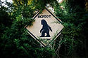 BigfootCrossing.jpg