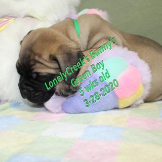 Bunny5wGBasleep.jpg