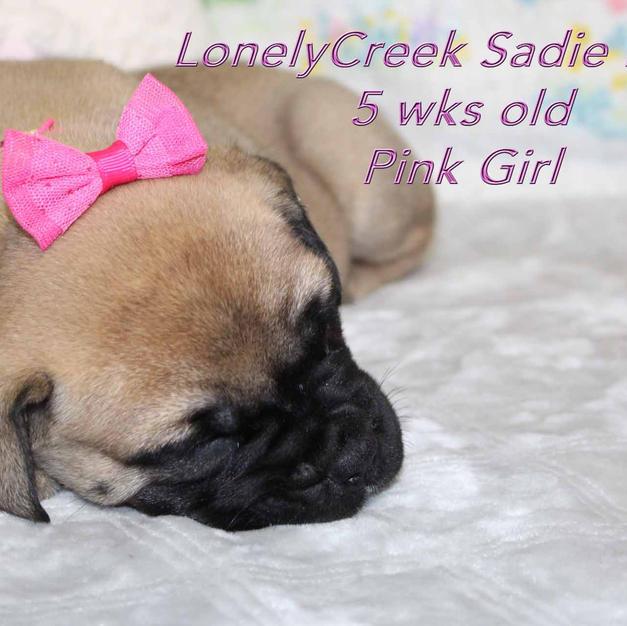 Pink Girl five wks old