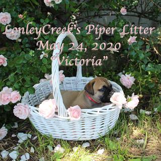 PiperlitterVictoria6wk.jpg