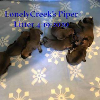 Piper1Wksd.jpg