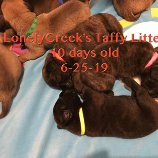 Taffy10dayoldN.jpg