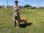 PipperDenton Dog sho.jpg
