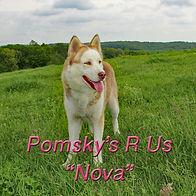 NovaspringA2019.jpg