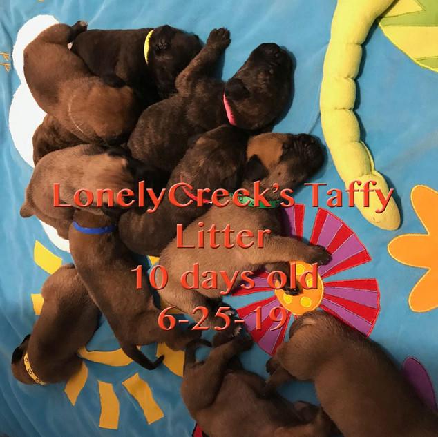 Taffy10daysoldC.jpg