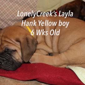 Layla6Yellowboyweks.jpg