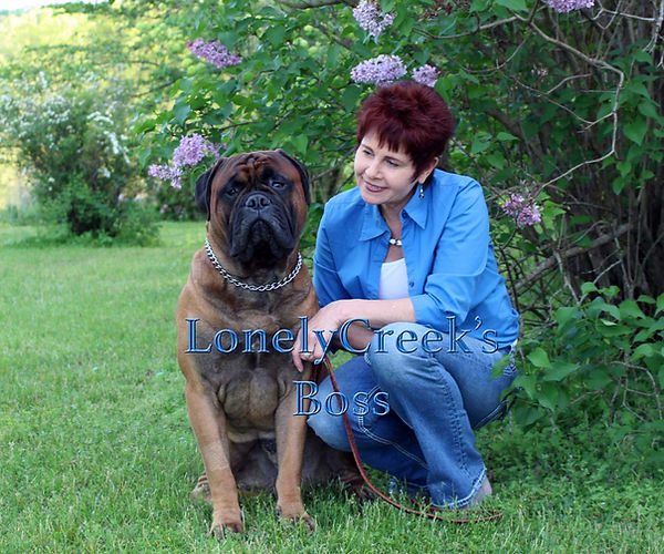Red bullmastiff Puppy for sell