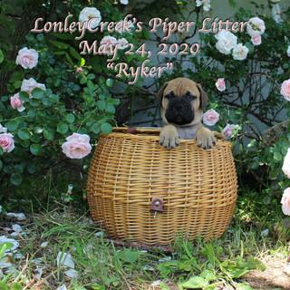 PiperRyker6wks.jpg