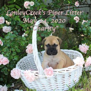Piper6wkCharitygirl.jpg