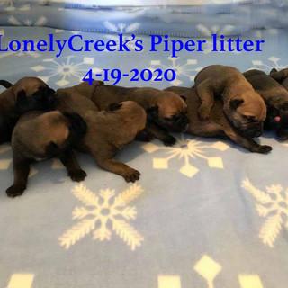Piper1wkb.jpg