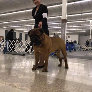 Titan Dog Show OK April 2021