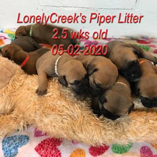 Piper2halfwkd.jpg