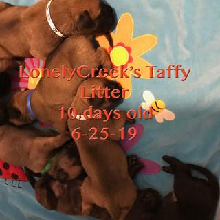Taffy10daysG.jpg