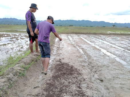 Rice Quality Seed Saving Project
