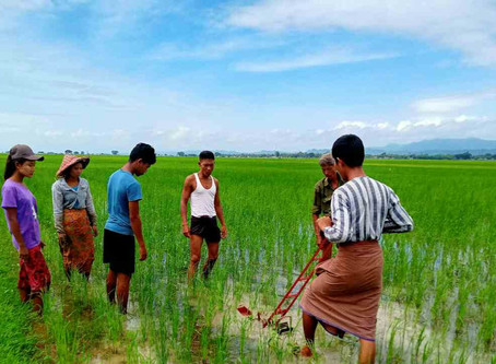 Weed Management Training to farmers in 30 villages, Kyauktaw Tsp.