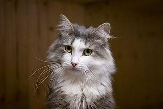 Рыже-белая кошечка Матиша ласковая и добрая, осторожная, ищет дом, отдаётся в добрые руки бесплатно из приюта для кошек Кошачья надежда!