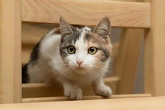 Рыжий игривый весёлый котёнок ласковый и добрый, осторожный, ищет дом, отдаётся в добрые руки бесплатно из приюта для кошек Кошачья надежда!