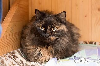 Чёрная кошечка Чернышка ласковый и добрый, осторожный, ищет дом, отдаётся в добрые руки бесплатно из приюта для кошек Кошачья надежда!
