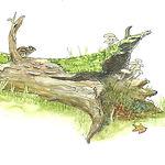 fallen tree.jpeg