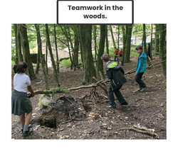Teamwork in the woods
