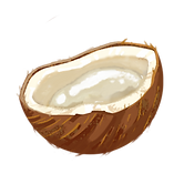 An illustration of a mature coconut that is cut in half to show the jellied coconut meat