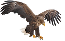 aguila2.png