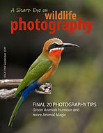 Front cover A Sharp Eye bee eater 1000.j
