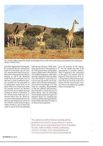 Museum giraffe.jpg
