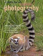 Front cover A Sharp Eye lemur 1000.jpg