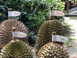 Raub Durian Orchard