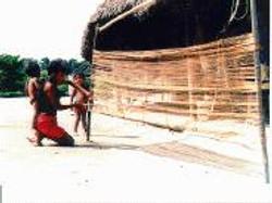 Waimiri Atroari confeccionando rede com fibra de buriti SAMKA