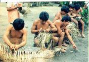 Homens Waimiri Atroari confeccionando JAMAXI (WYIEPE) e cesto (PAKRA)