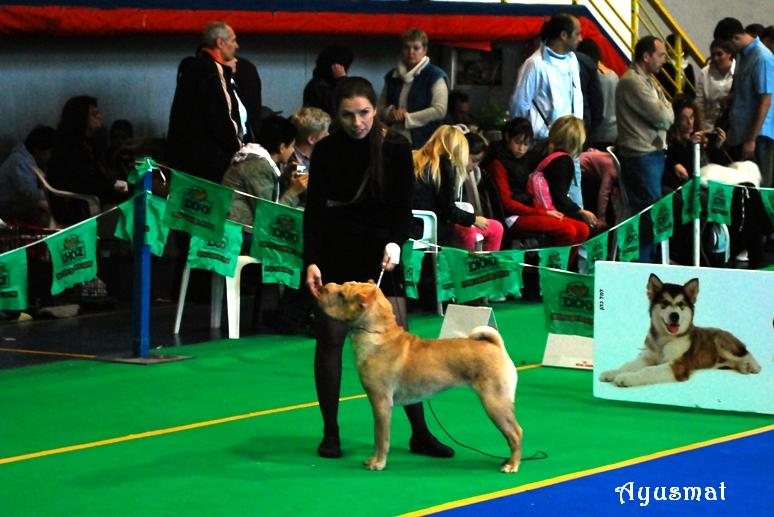 Doga Club Dog Show - 12.12.2009, Kfa