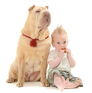 Baby and shar pei