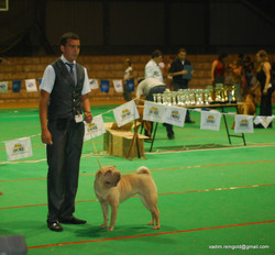 Doga Club Show - 07.08.2010