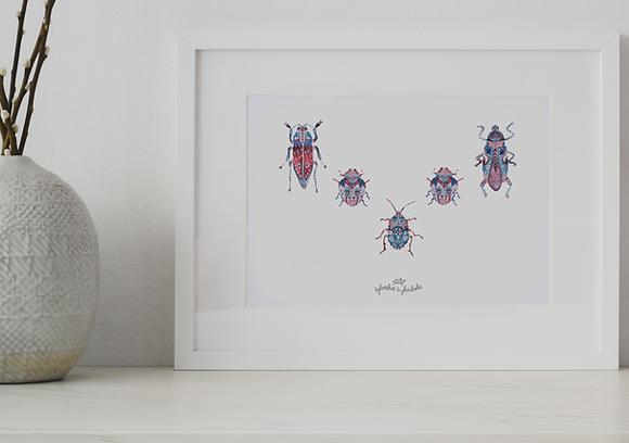 Insectes Famille Illuminati