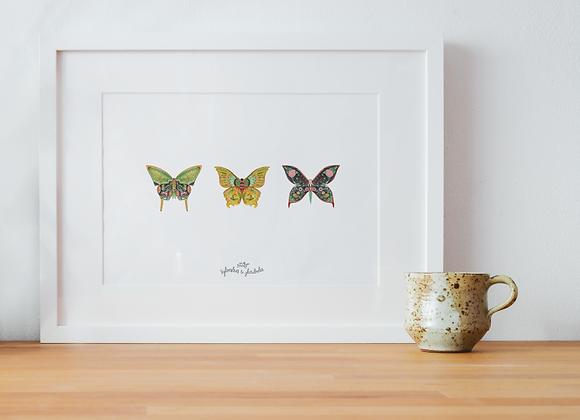 Papillon Famille Verdi