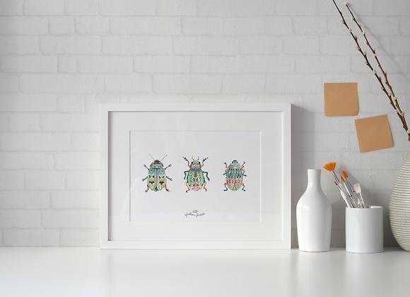 Insectes famille Rosarée