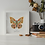 Thumbnail: Papillon solo - Orange Mecanic