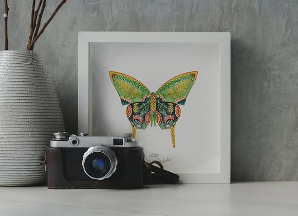 Papillon solo - Green Zebra
