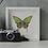 Thumbnail: Papillon solo - Green Zebra