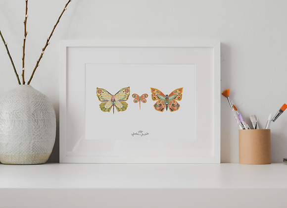 Papillon famille Solaris