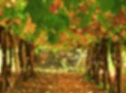 uva-mesa7.jpg